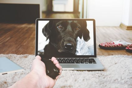 Pet Tech: What to Get