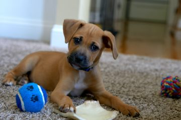 National Pet Month: Amazon's Best Gift for Pets!