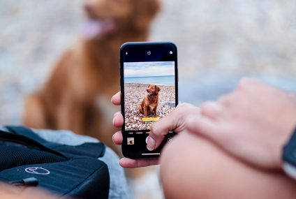 Best Apps To Download For Your Fur Babies and Pets