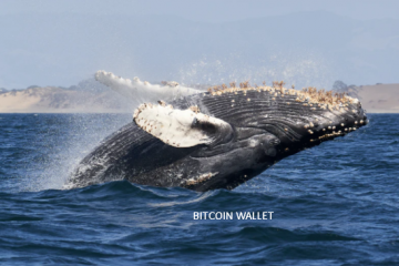 9yr. Old Bitcoin Wallet Comes Active with 345,618% Surge in Value