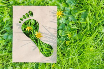 Google Introduces New Tools To Help Users Reduce Their Carbon Footprints